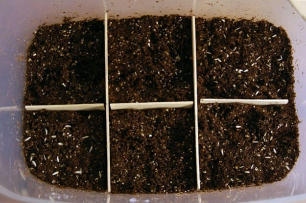 Winter Sowing 5