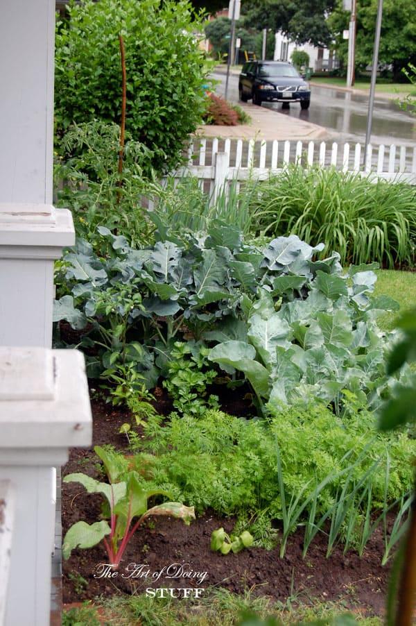 front-yard-garden-left