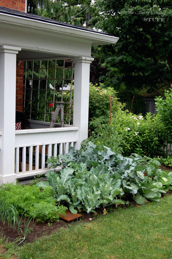 front-yard-vegetable-garden-corner