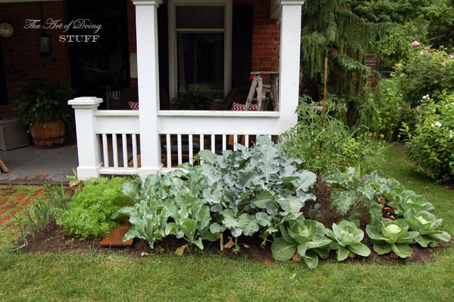 front-yard-vegetable-garden-right