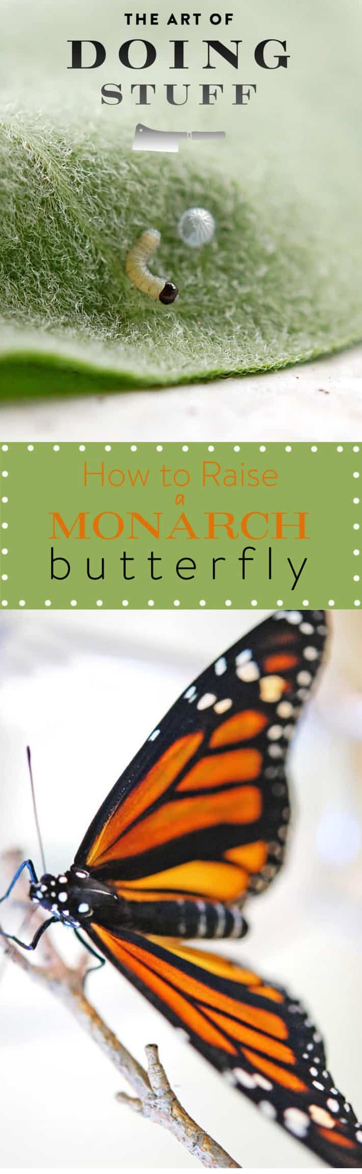 monarch-long-pin