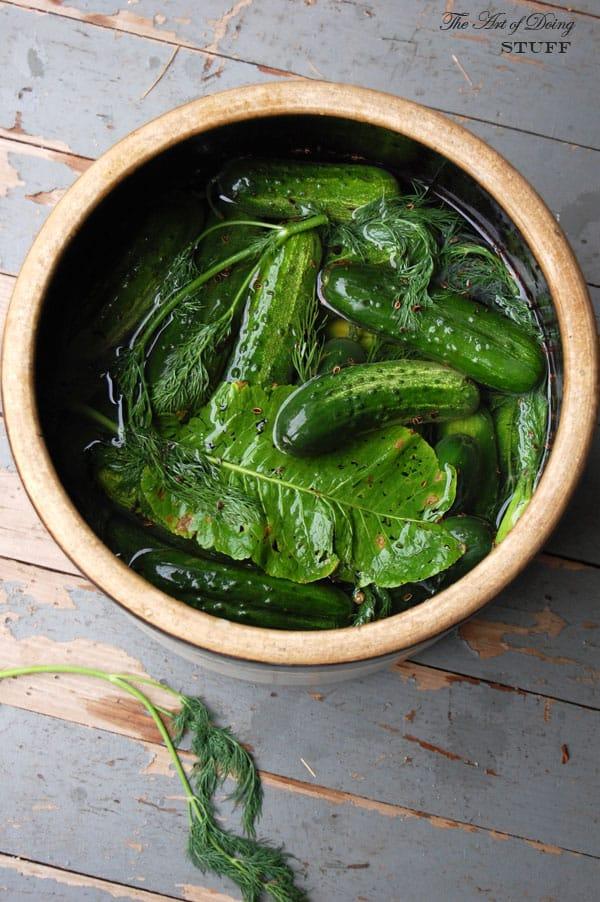 brining-pickles
