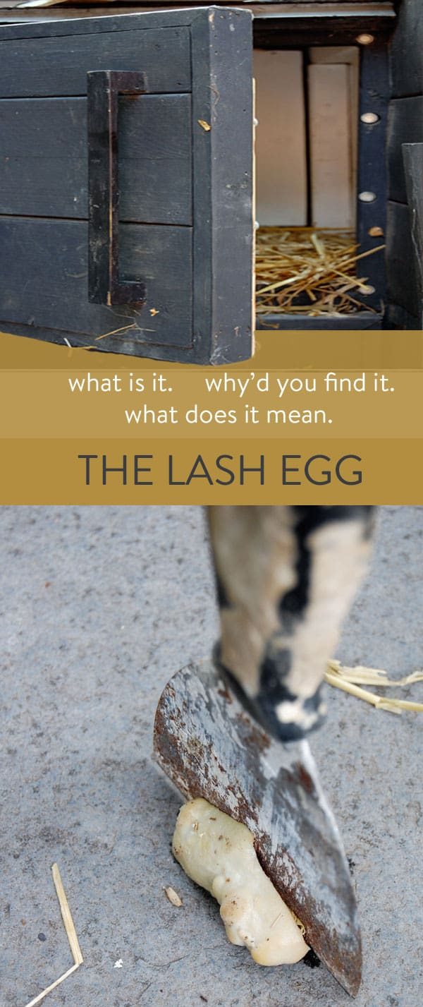 The Lash Egg.<br></noscript>Or, what the hell just came out of my chicken?