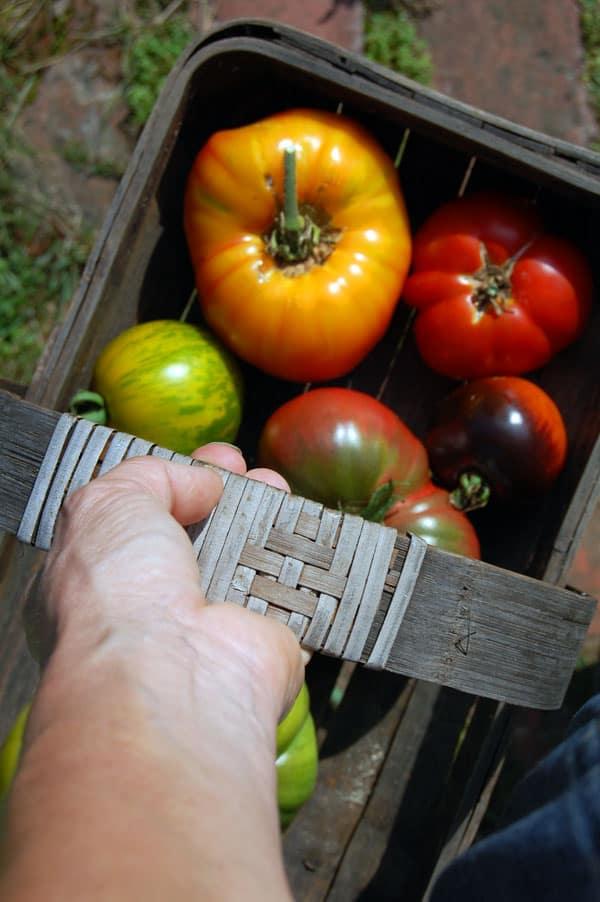 tomateos-4