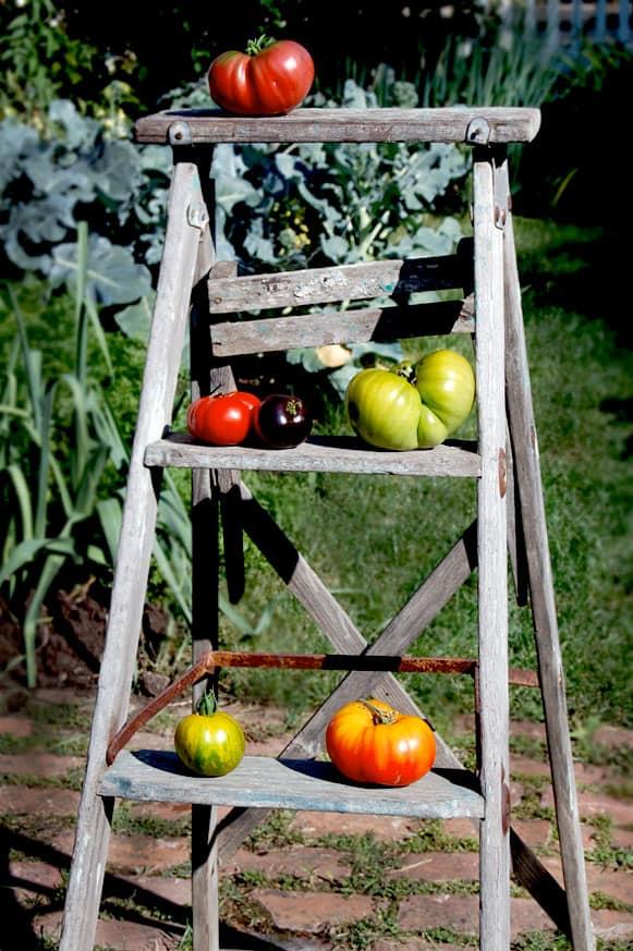 tomatoes-1