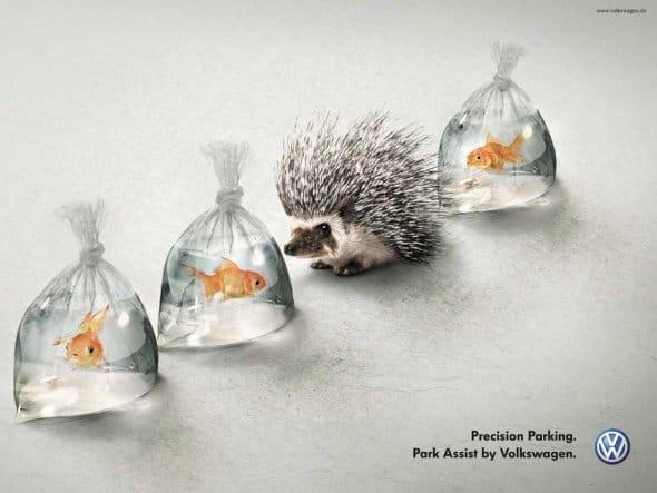 volkswagen-hedgehog-goldfish.png