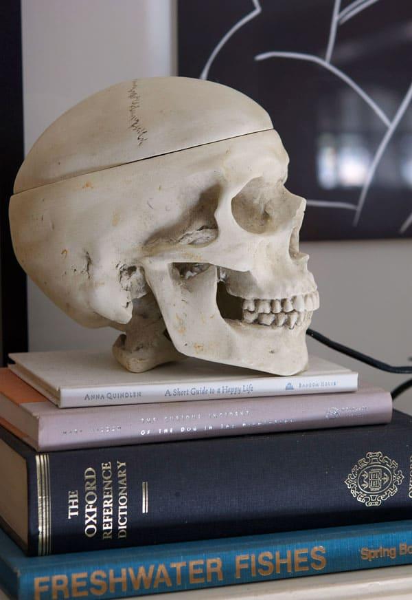 side-view-skull
