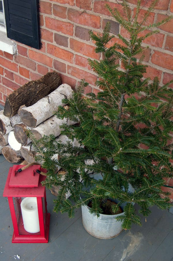 potted-tree-and-logs