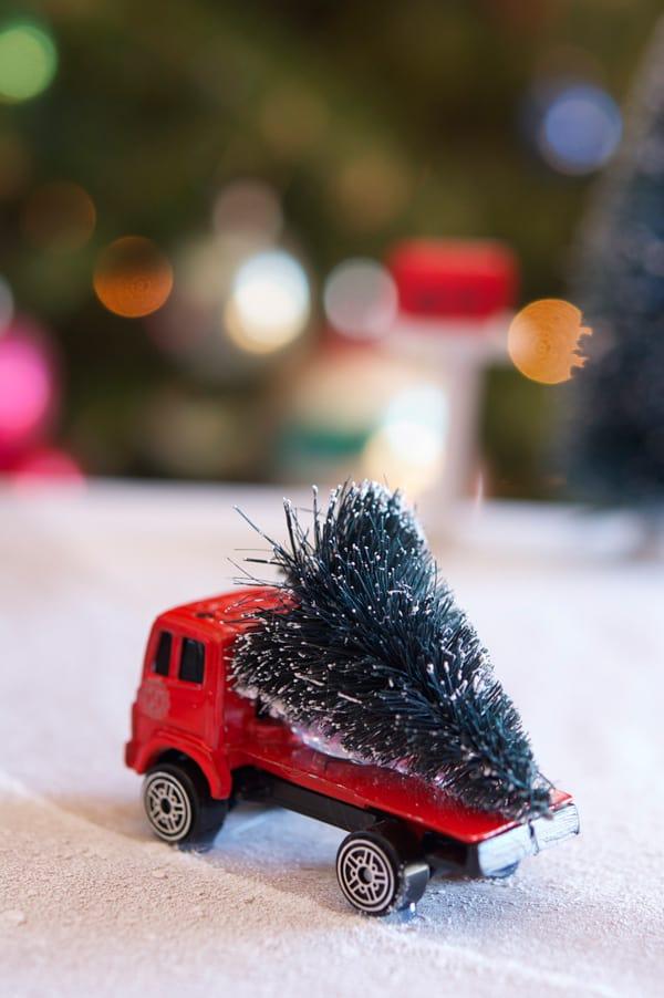tree-on-truck