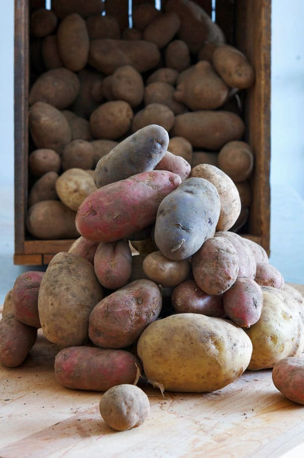 potatoes-long-term-storage