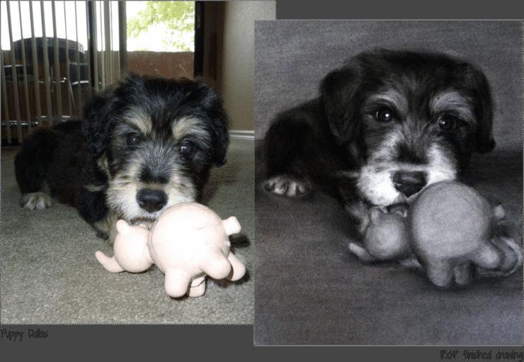 puppy-dallas