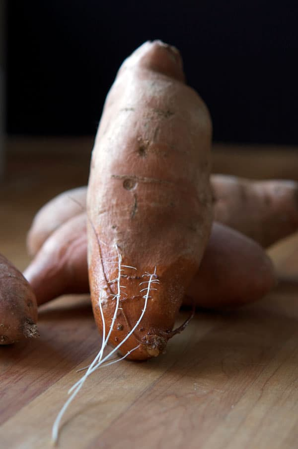sweet-potato-roots