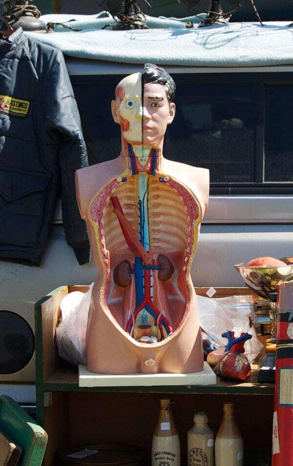anatomy-model