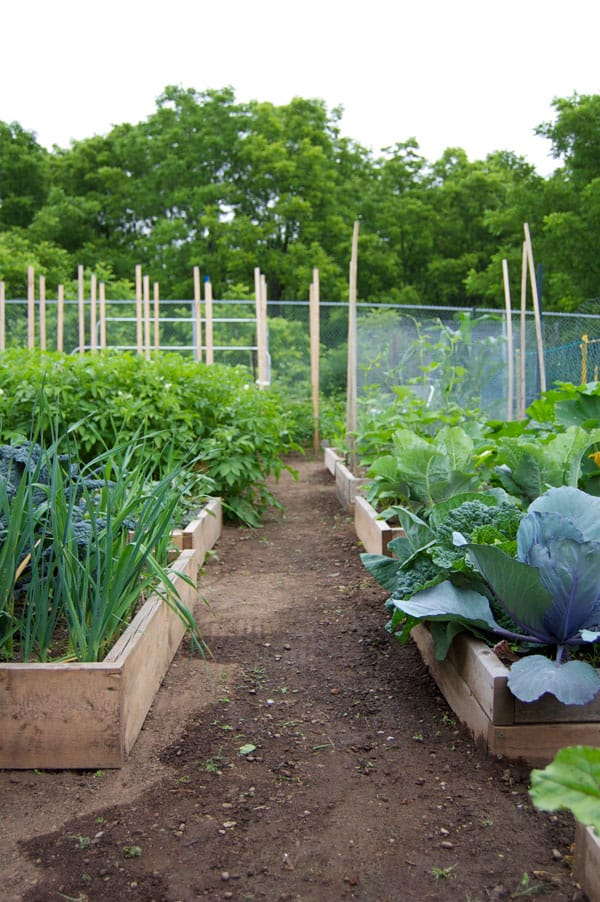 community-garden-right-side