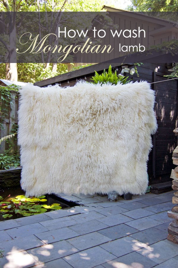 I washed my Mongolian Lambskin throw