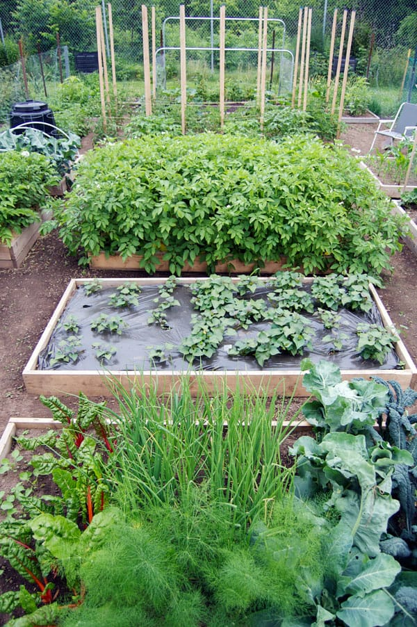 Tour of a Potager type vegetable garden with raised beds The Art of