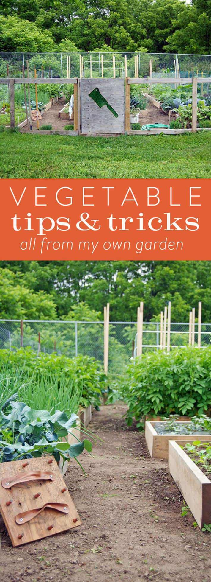 Vegetable gardening tips from my own community garden allotment.  A little DIY, a few tricks and a lot of info!