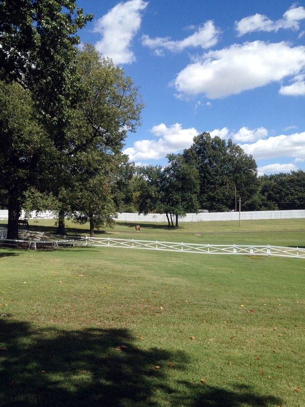Graceland-pastures