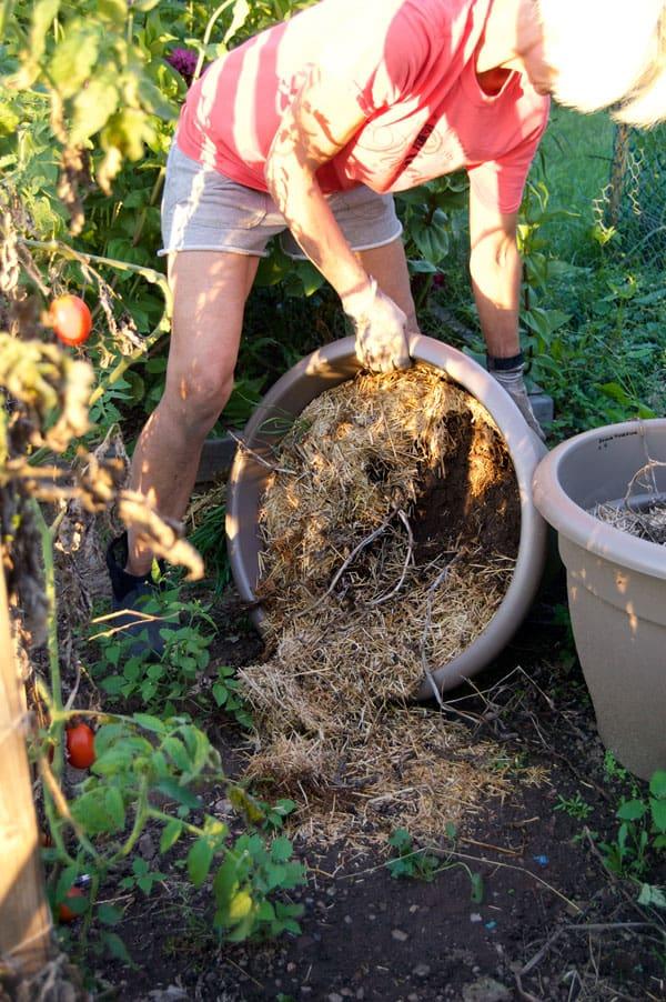 harvesting-potatoes-in-pots