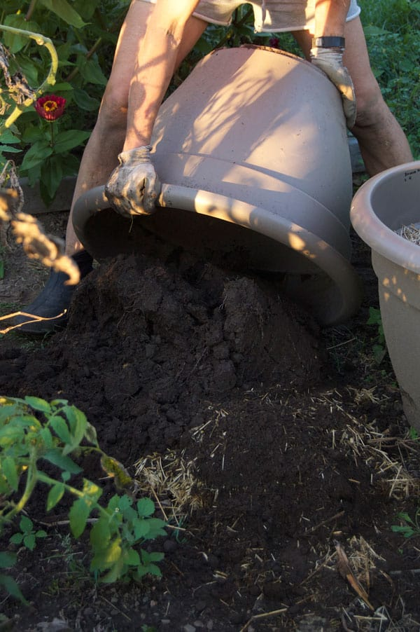 potatoes-in-pots-harvest