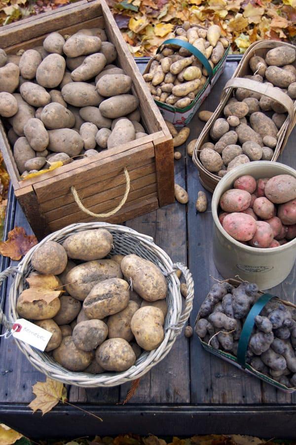 100-lbs-potatoes
