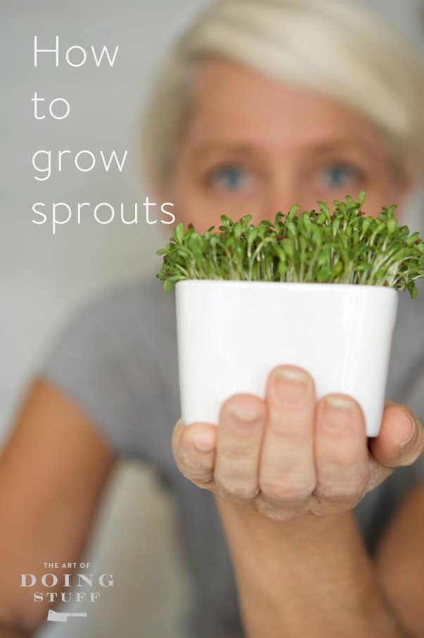how-to-grow-sprouts