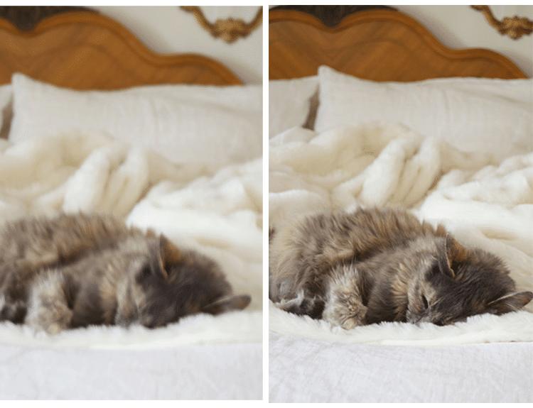 cat-side-by-side