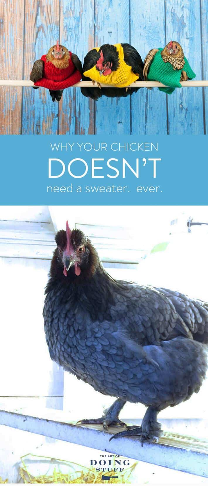 chicken-sweater-no