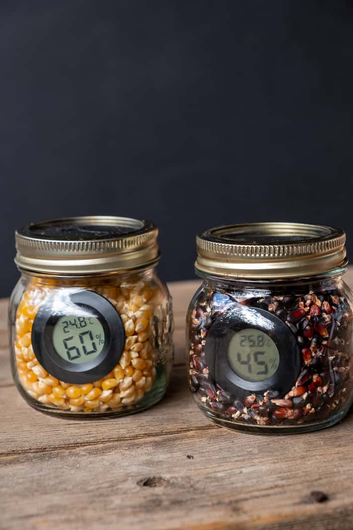 A half pint mason jar filled with yellow corn sits beside a half pint mason jar filled with black corn, each with a small disc hygrometer in them.