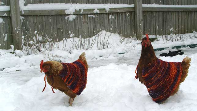 Chickens romping in the snow wearing knit capes.