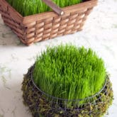 Grow a Grass Easter Basket – in 5 Days!