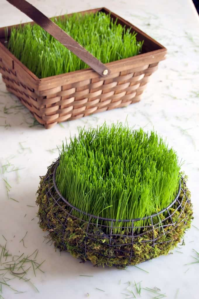 Real grass easter baskets.