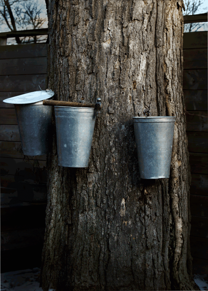 sap-buckets