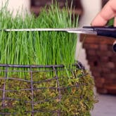 CREATE AN EASTER BASKET FILLED WITH REAL GRASS IN 5 DAYS!