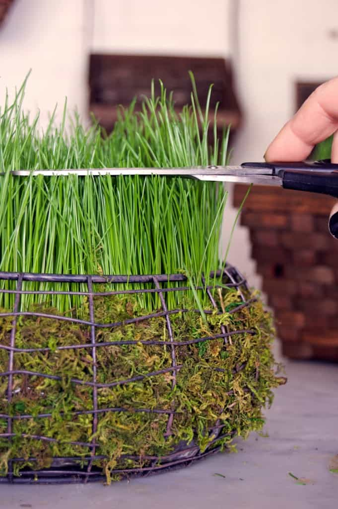 Trimming real grass easter basket.