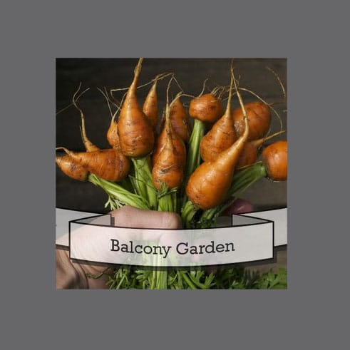 Balcony Garden Seeds