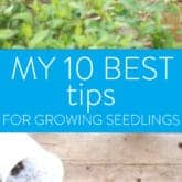 10 SEED STARTING TIPS