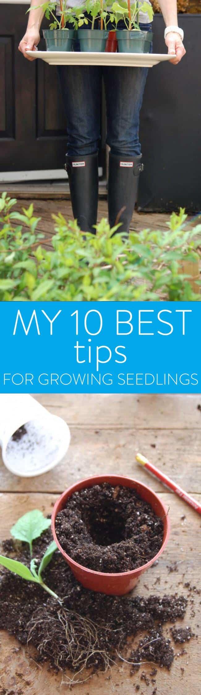 seedling-tips