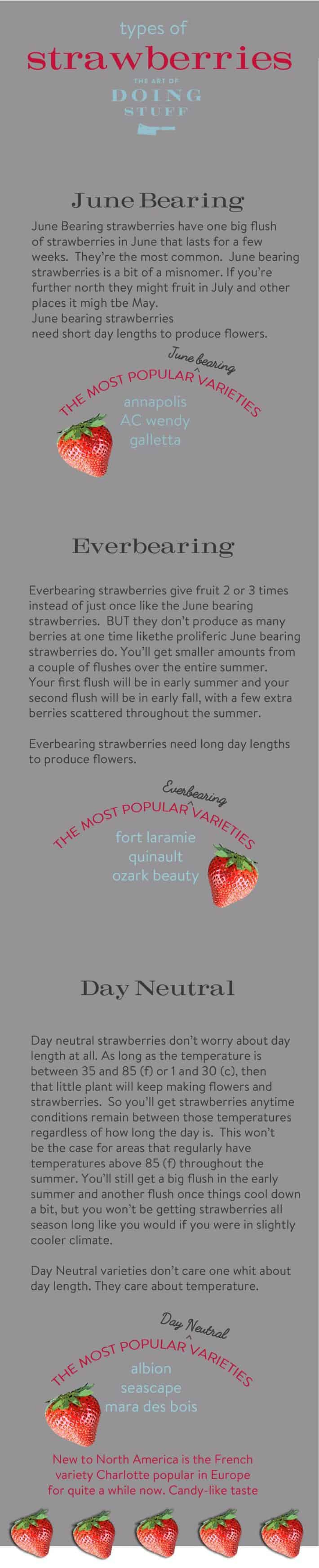 varieties-of-strawberries