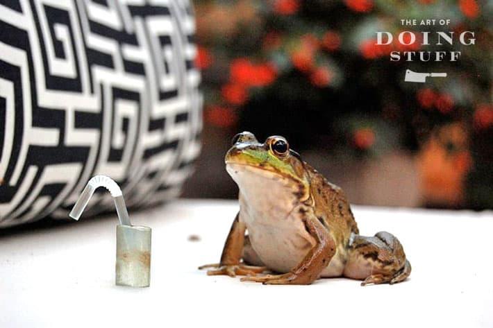 Drunkfrog