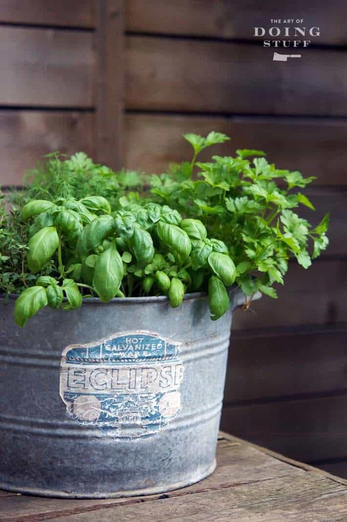 galvanized-planter