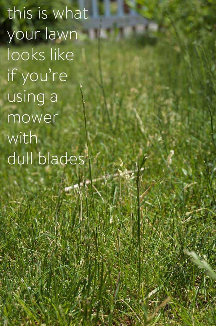 cutting-grass-with-dull-blade