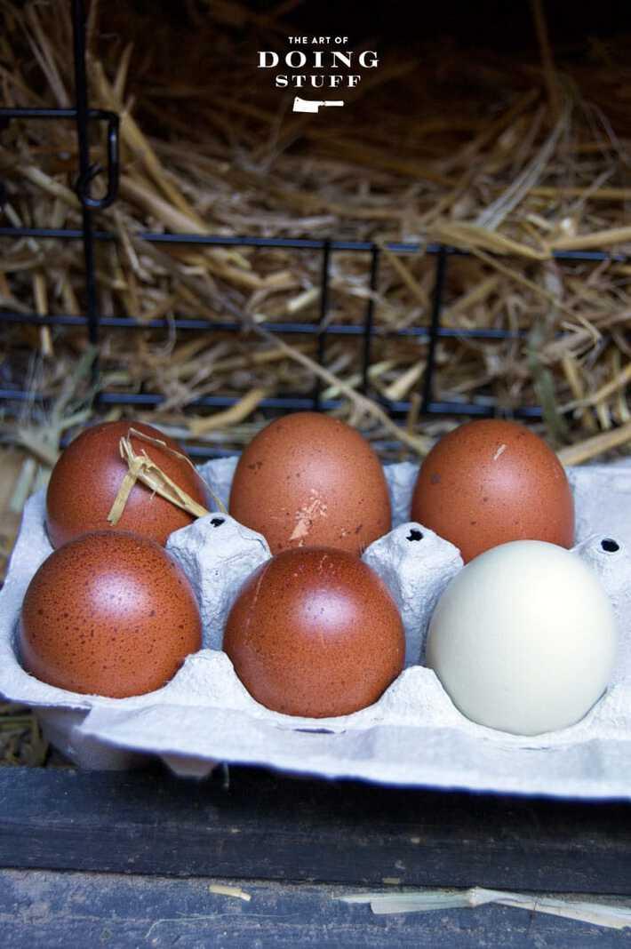 dummy-eggs