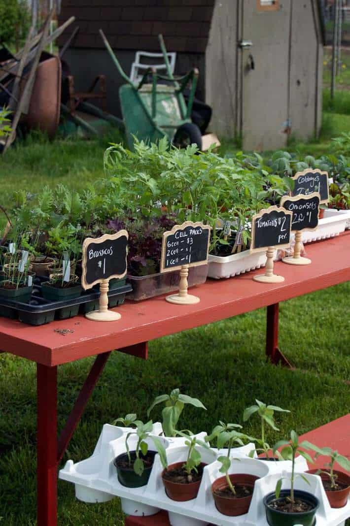 table-plants