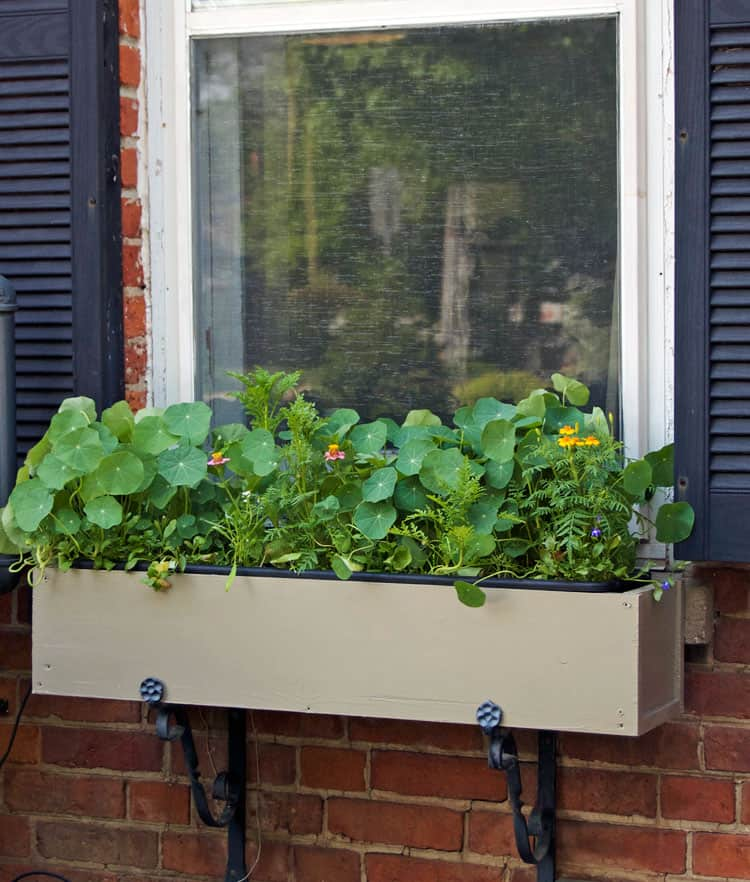 window-box-2