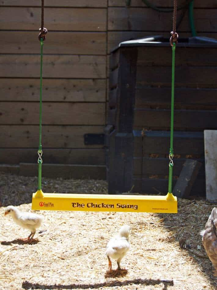 the-chicken-swing-1