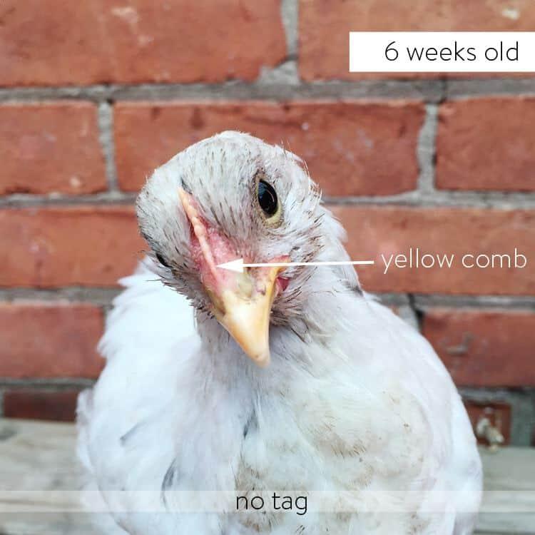 No-tag-6-weeks