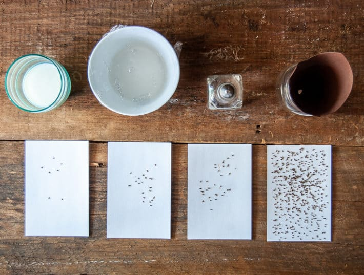 4 DIY fruit fly traps lined up on a counter with all the fruit flies each one caught over a 3 day period.