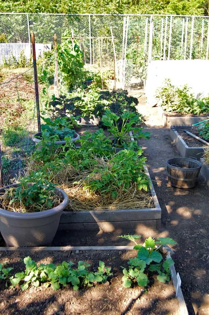 left-side-of-garden