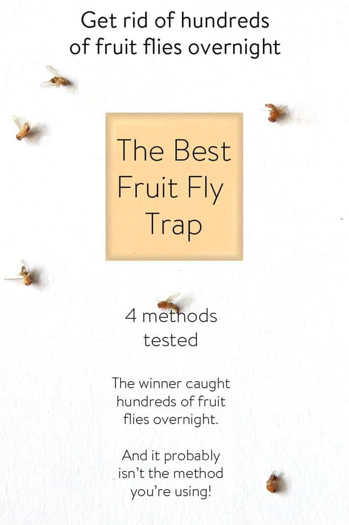 The Best DIY Fruit Fly Trap on The Planet.